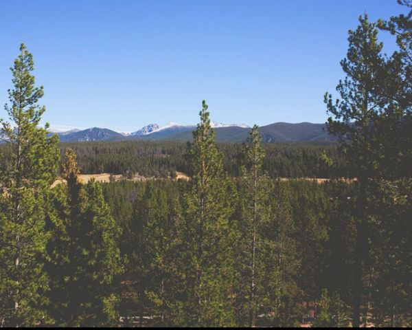 Treetops Bigsky Country Mountains