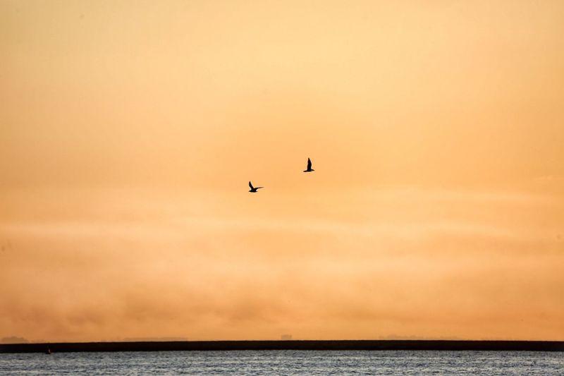 Lost In The Landscape Sea Sea And Sky Bird Birds Sunset Sunrise