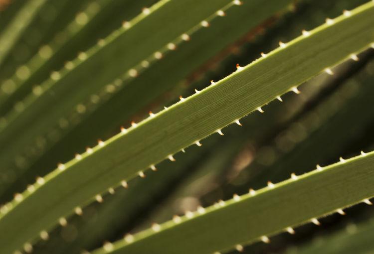 Close-up of leaves on leaf