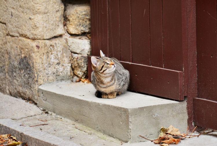 Cat On Steps