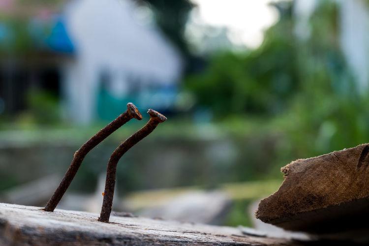 Close-up of lizard on metal railing