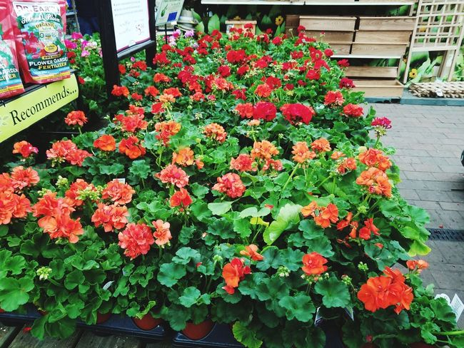 Flower Head Flower Greenhouse Flower Market Retail  High Angle View Plant Blooming Flower Shop Florist Plant Life Botany In Bloom Retail Occupation Bud For Sale Plant Nursery Blossom