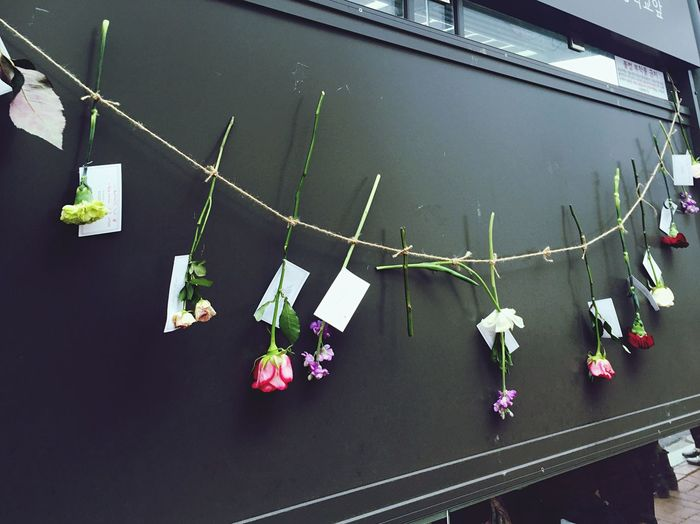 flowers lined up On Bus Stop