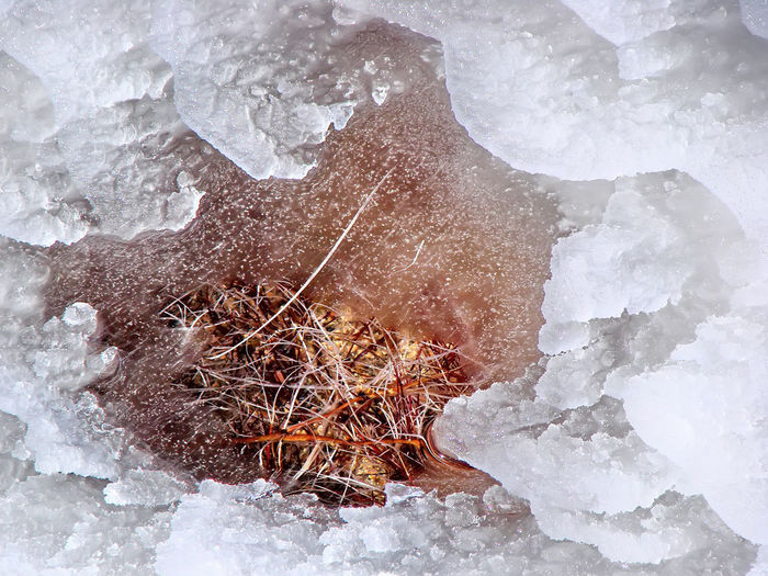 Close-up of frozen rock on land