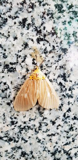 Sand Beach Insect High Angle View Close-up Butterfly - Insect Butterfly Animal Wing