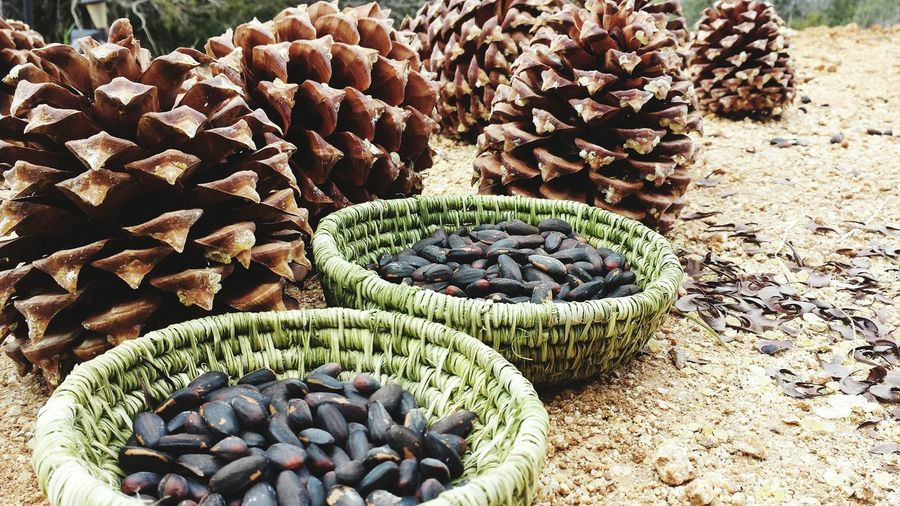 Bounty of the land. Pine nuts from Grey Pine trees in handmade yucca baskets. EyeEmNewHere Nature Provides Good Life Handmade Baskets Foraging Nature's Bounty Yucca Basket Pine Cones Grey Pine Cones Foraged Food Wild Food Native Food Pine Cones Pine Nuts