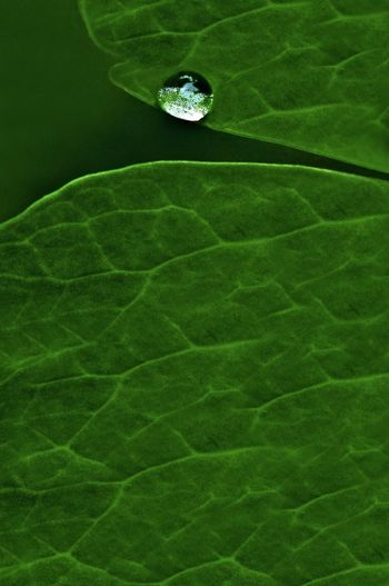 High angle view of leaf floating on water