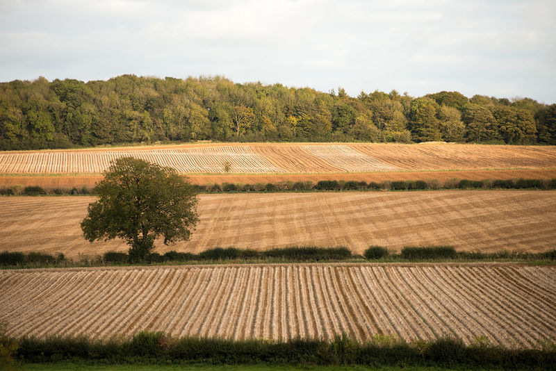 Ploughed and harvested fields on a hillside with single tree and forest background. Autumn Agriculture Beauty In Nature Day Field Grass Growth Hedgerow Hedgerows Landscape Nature Outdoors Ploughed Ploughed Field Rural Scene Scenics Sky Tranquil Scene Tranquility Tree