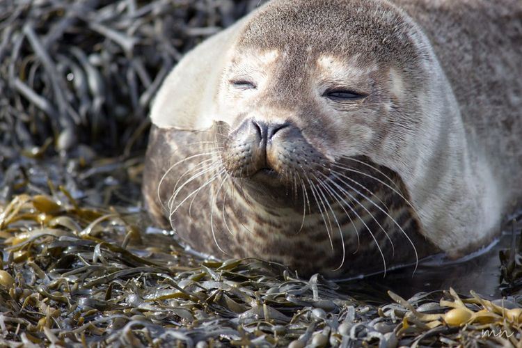 Animal Animal Body Part Animal Head  Animal Themes Beauty In Nature Close-up Day Focus On Foreground Mammal Natural Pattern Nature No People Outdoors Portrait Scotland Seal Selective Focus Wildlife