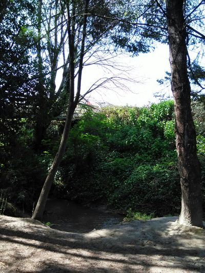 At the Parkin Fortuna California . Pacific Northwest  Green Trees and Creek .