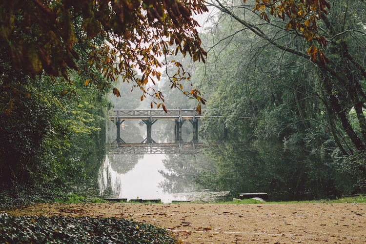 park with bridge and lake view Autumn Gifhorn Architecture Beauty In Nature Branch Bridge Built Structure Day Forest Garden Germany Growth Leaf Nature No People Outdoors Park Plant Tree Water