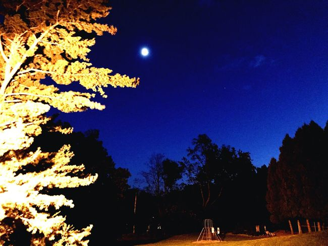 Moon. October 9th Tree Night Tranquil Scene Moon Beauty In Nature