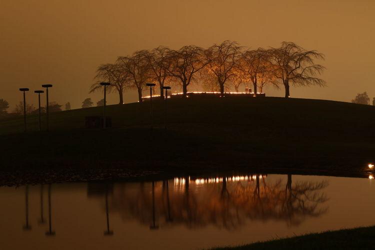 Illuminated woodland cemetery and arboretum against sky at dusk