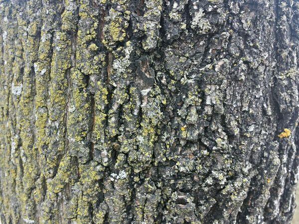 Tree Junkie Treegasm For The Love Of Trees ~ Tree Art Wooden Texture TreePorn Tree Porn Hugging A Tree Treetastic Tree_collection