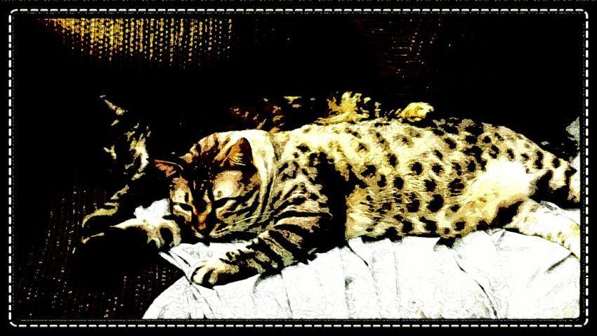 A couple comfy kiddos. Asypen & Blue. ♡ Relaxing Cat enjoying life