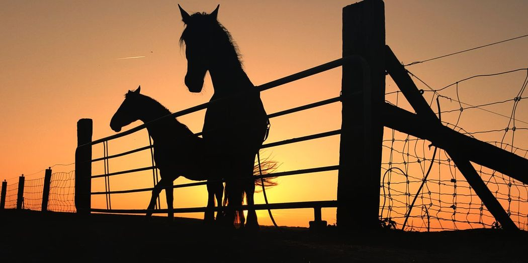 Sunset Sky Silhouette Outdoors Horses Friendship Mobile Photography From My Point Of View Groninger Hoogeland Boerenland Route Landscape Beauty In Nature