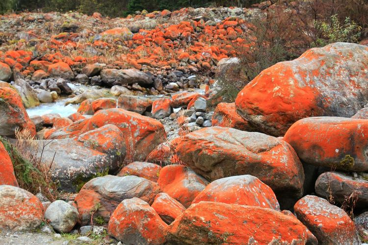 Close-up Rocks Redstones Redrocks ASIA China Foreground Focus On Foreground Outdoors Photography Wildlife Themes Valley Hill Moist Wildlife & Nature Inthevalley Nature Wonderful Shoot Scenics - Nature Beauty In Nature Amazing View Full Frame Orange Color Close-up Pebble Beach