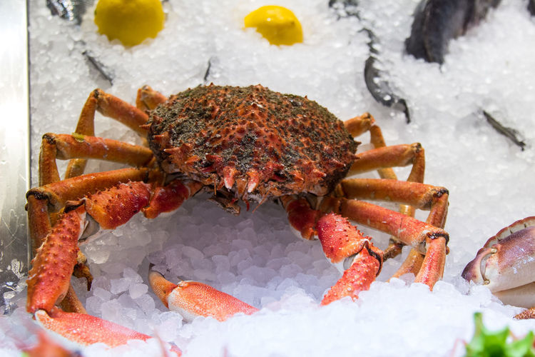 High Angle View Of Crab On Ice