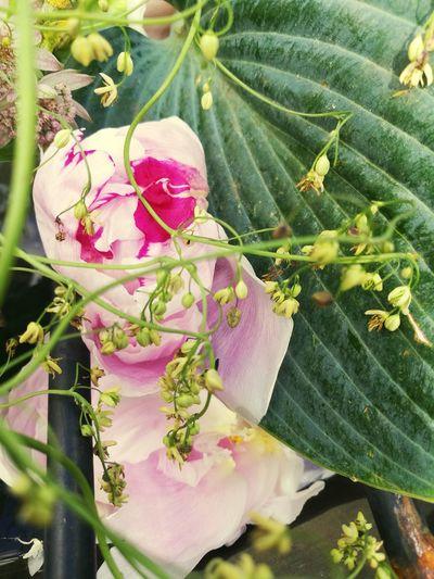 Spring Flowers Springtime Spring Raindrops Dansk Natur Decay Flowerporn Romantic Sommer Flowers Nature Roses Flower Photography Summer Romantisk Flowers, Nature And Beauty Blomster Flower Rain