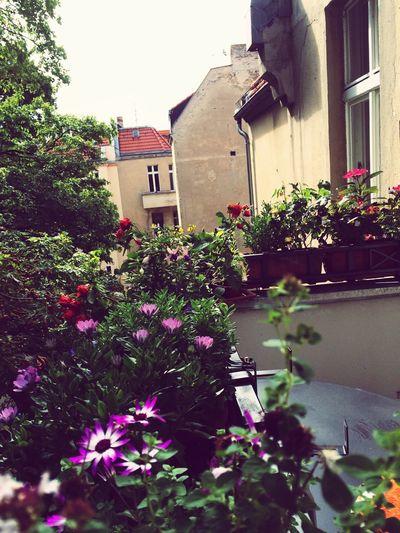 Balkonien oder