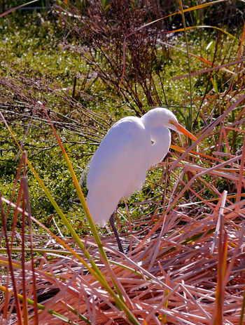 Animals In The Wild Birding Center Crane Day Migrant, Nature Wetlands White White Color Wildlife