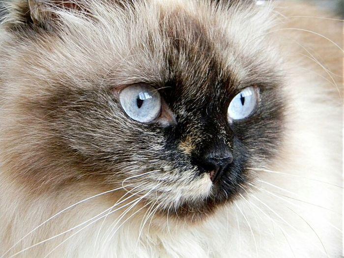 My cat Busya
