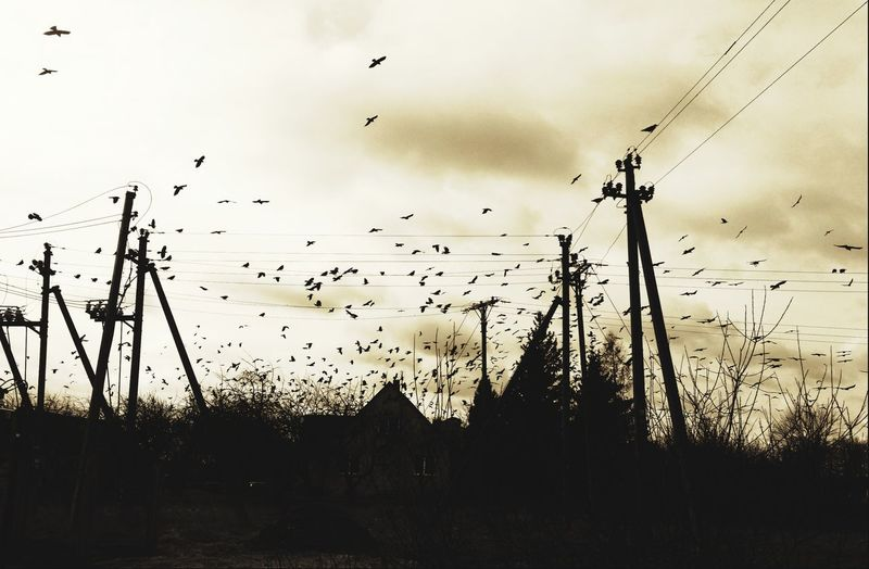 Crows on old