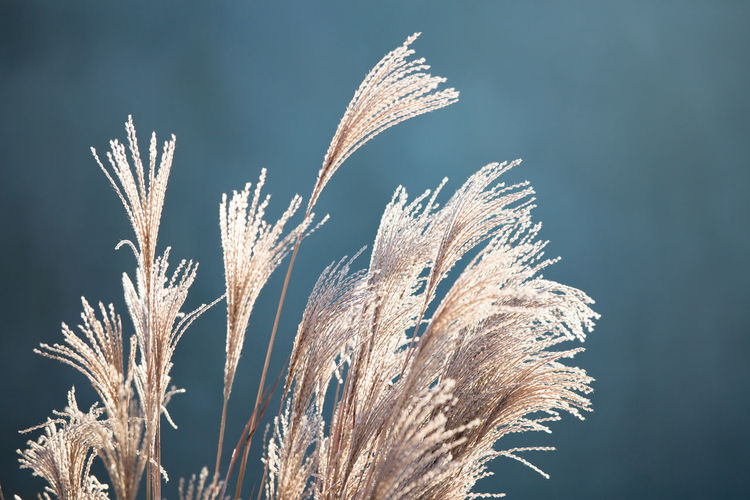 Close-up of snow on dry plant