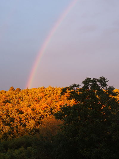 Arc en ciel Exceptional Photographs Shadows & Lights Autumn Beauty In Nature Day Double Rainbow Growth Idyllic Low Angle View Mountain Multi Colored Natural Phenomenon Nature No People Outdoors Popular Photos Rainbow Scenics Sky Spectrum Tranquil Scene Tranquility Tree