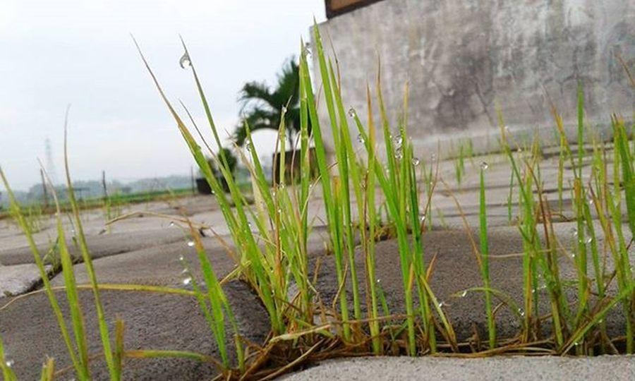 Selamat pagi Selamat hari minggu 🙌🌱🌱 . . . Fotograferjomblo Anakikutikutan Anaksoksibuk Rumput Sebentar2keluar