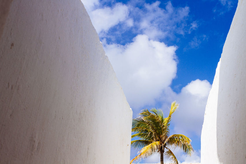 A solitary palm rests in the courtyard of the Fort of Santa Maria Beach Blue Cloud - Sky Clouds And Sky Day Forte Santa Maria Fortification Fortification Wall Low Angle View No People Palm Tree Place Of Heart Salvador Bahia Scenics Sky The Architect - 2017 EyeEm Awards Tranquility Tree Walls Sommergefühle