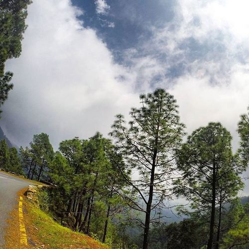 Cloudyday in the Hills Naturephotography Nainital Himalayas Uttaranchal Traveluttarakhand Incredibleindia Lonelyplanetindia Indiapictures Indiaphotos Mountains Monsoons Clouds Roadtrip Travel Indiatraveller Naturelovers Pine Pinetree Forest