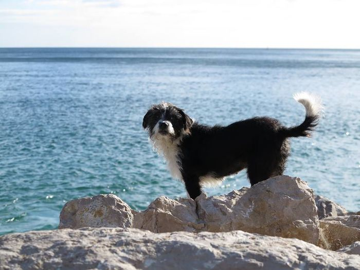 Peuga Beachlovers No Filter, No Edit, Just Photography Miss My Dog Perfect Days Animal Themes Beach Sand DogLover❤💓💜🐾 Black And White Dog🐕 Pets