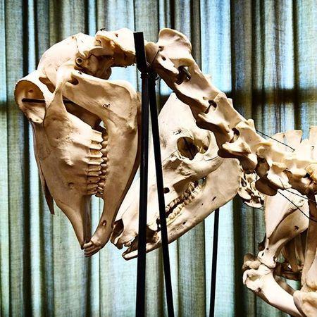 Skeleton animals Animals