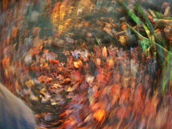 Its all a whirlwind EyeEm Nature Lover Forest Dazed Autumn Colors