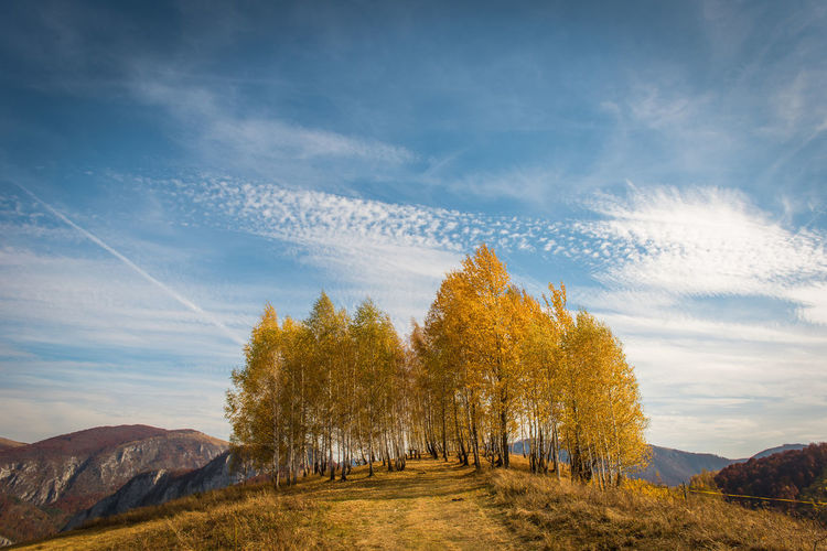 Trees on landscape against sky during autumn