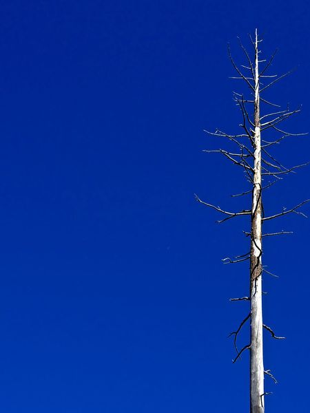 Bare Tree Blue Clear Sky Copy Space Day Low Angle View Nature No People Outdoors Sky