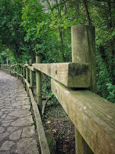 Footpath by railing in park