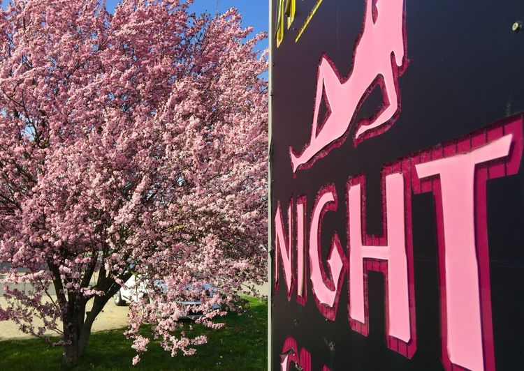 Pink By Night Flowers Showcase April
