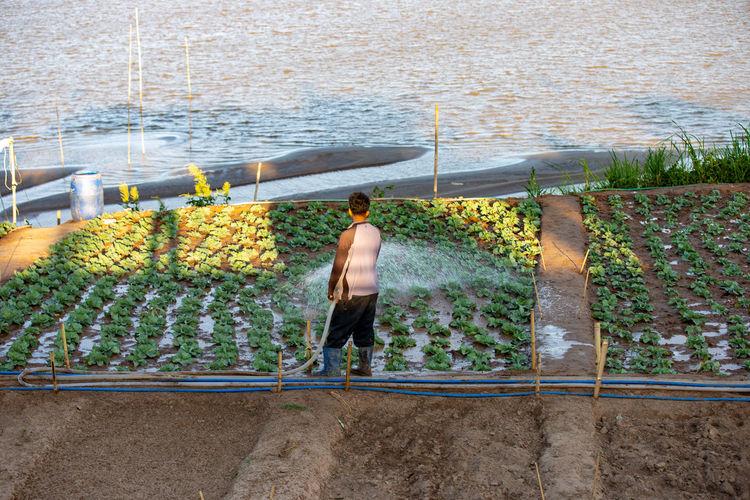 Rear view of man watering plants on field