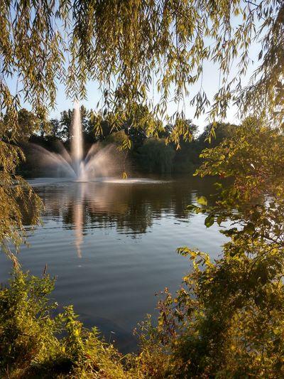 No People Lake Buffalo, NY Leaves Hoyt Lake Tree Water Spraying Lake Sky Plant Life Fountain