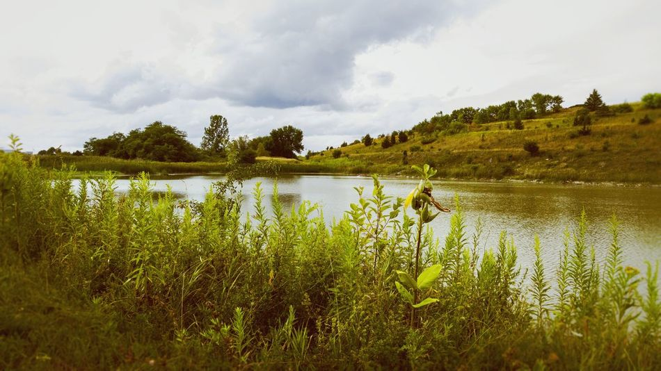 Brooding skies over a pond. Water Arrival Wetland Aquatic Nature Tree Swamp Landscape Backgrounds Tourism Extreme Weather Plant Grass Reflection Lake Multi Colored Plain
