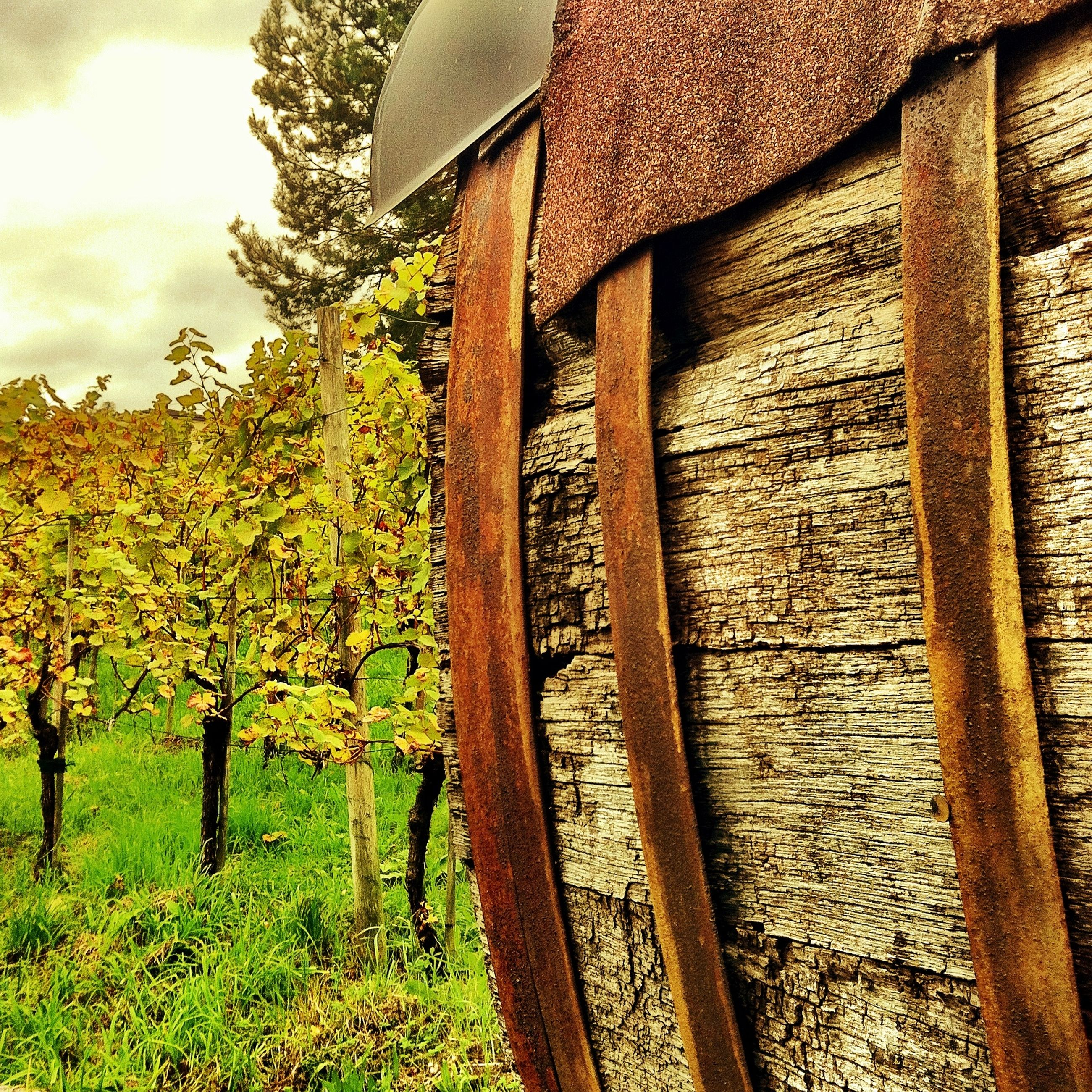 wood - material, field, growth, rural scene, wooden, tree, day, agriculture, nature, built structure, outdoors, sunlight, plant, no people, fence, wood, house, sky, close-up, farm