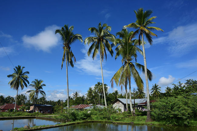 View in the Morning Architecture Beauty In Nature Blue Building Exterior Built Structure Cloud - Sky Day Growth INDONESIA Indonesia_photography Nature No People Outdoors Scenics Sky Tranquil Scene Tranquility Travel Travel Destinations Travel Photography Travelling Tree Water Westsumatera