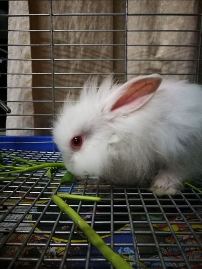 Snowball in the house🐰