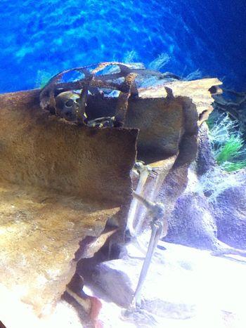 Water Blue Diyarbakır Turkey Türkiye Iskelet First Eyeem Photo IPhone Aquarium Life Aquarium Dead
