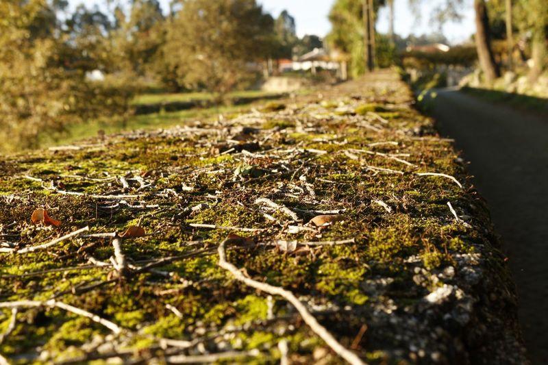 Outono2016 Montecordova Trilhoszn Rioleça Muroverde Musgo