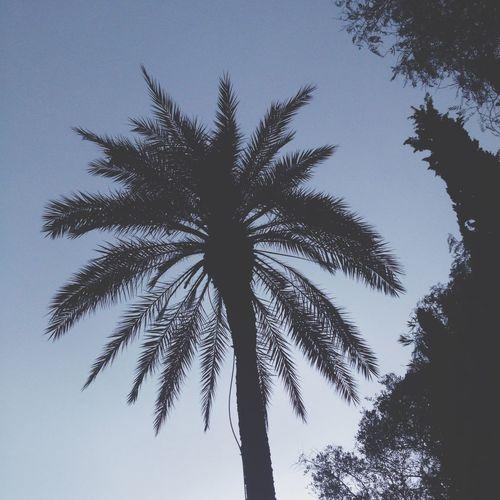 CORFU ISLAND Greece Palm Trees Shadow Summertime Hello World Enjoying Life