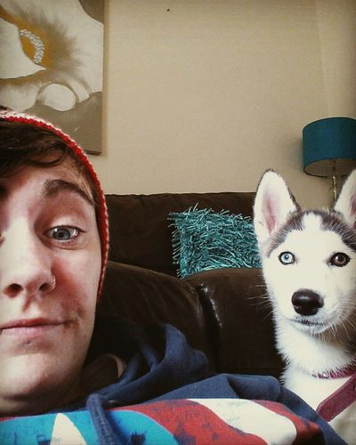 Home Is Where The Art Is Home Is Where Our Puppy Is Husky Puppy PuppyLove Blue Eyed Baby