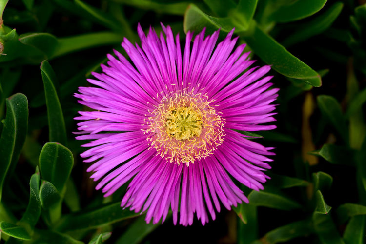 Flower Purple Plant Petal Flower Head Beauty In Nature Freshness Nature Blossom Multi Colored Uncultivated Close-up Summer Village House Izmir Turkey EyeEm Gallery EyeEm Best Shots Beauty In Nature Macro Photography Macro_collection Macro_flower Bokeh Nature Bokehphotography Macro Beauty Macro_captures